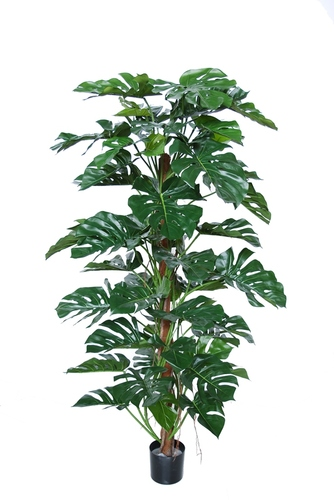Split Philo Climber w pot 180 cm Green