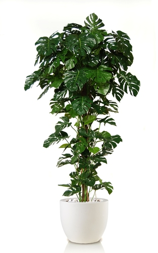 Split Split Climber w pot 250 cm Green