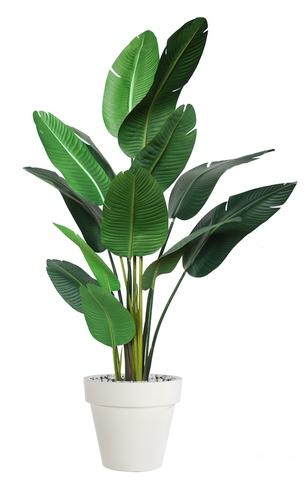 Strelizia Plant 190 cm Green