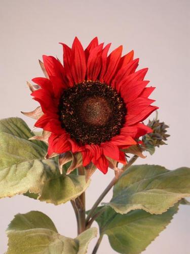 Sunflower_Lg_90_cm_Red_4344RED[1]