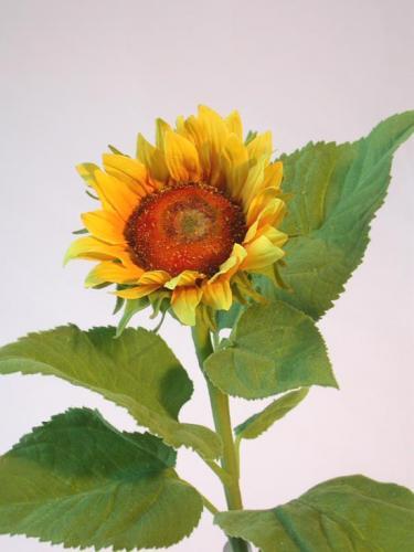 Sunflower_Sm_70_cm_Yellow_4345YEL[1]