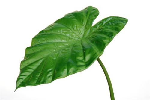 Taro_Leaf_75_cm_Green_5055GRN