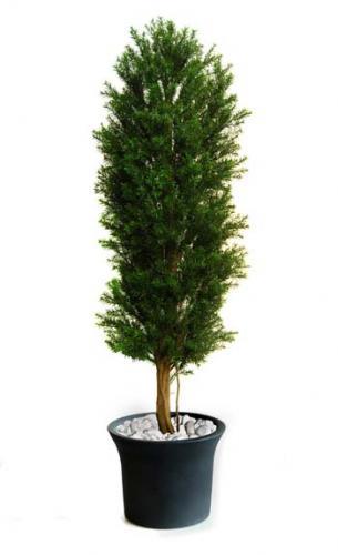 Taxus_Column_160_cm_Green_Flora_Ant_8105004