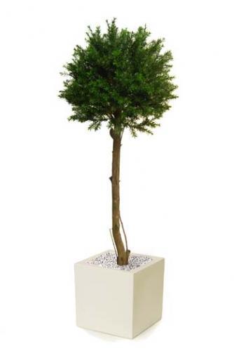Taxus_Topiary150_cm_Green_8105005