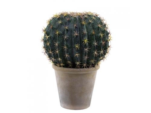 echinopsi palla