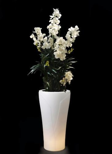 Vanda_Orchid_Plant_WHT_Tulip_Light_210_cm_rid.