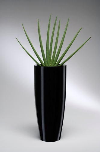 Black conical pot with sanseveria cylinder