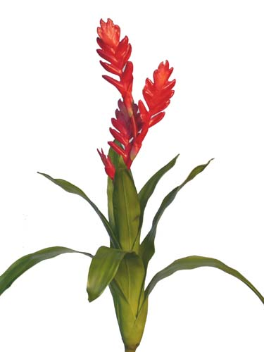 Vriesea_Plant_55_cm_Red_4092RED[1]