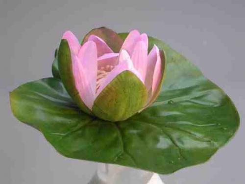 Waterlily_Floating_diam._20_Pink_4198PNK