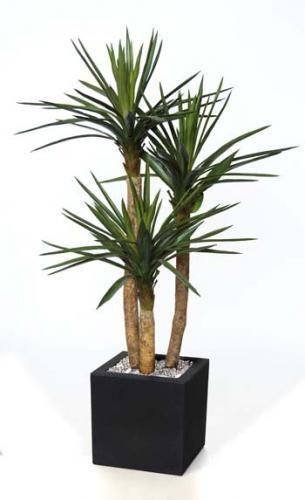 Yucca_Gloriosa_Set_x_3_180_cm_Green_4347A03
