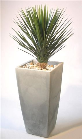 Yucca_Linearis_Plant_130_cm_Green_V_4233A01