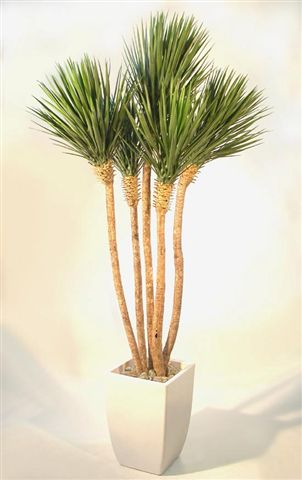 Yucca_Linearis_Set_x_5_250_cm_Green_V_4233A04