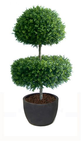 z_Boxwood_Double_Step_150_cm_Green_V_4492A01