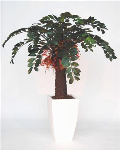 Zamiifolia_Revoluta_w_Berries_180_cm_Green_Orange_V_4218A06