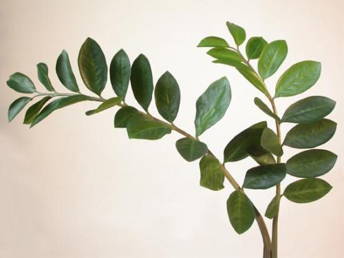 Zamiifolia_Set_x_2_110_cm_Green_4209GRN_Green