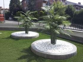 Areca palm in composizione passionecreativa