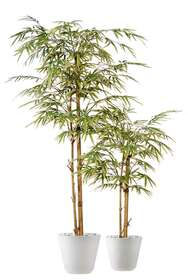 Bamboo Japanese Tree 180 120 cm Variegated
