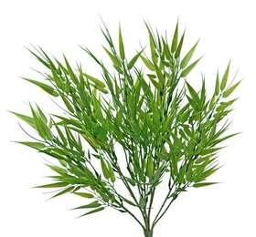 https://www.passionecreativa.it/data/upload/small/bamboo-mini-bush-35-cm-green-5471grn.jpg