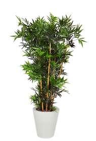 bamboo vaso conico bassa