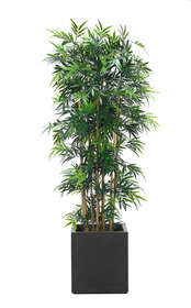 bamboo vaso cubico