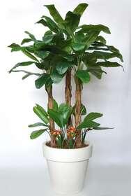 https://www.passionecreativa.it/data/upload/small/banana-tropical-bush-280-cm-green-oragne-v5569002.JPG
