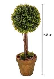Bosso h 35 cm