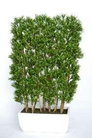 Bosso a siepe verde h 180 cm su misura