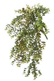 https://www.passionecreativa.it/data/upload/small/boxwood-mini-bush-40-cm-green-5579grn.jpg