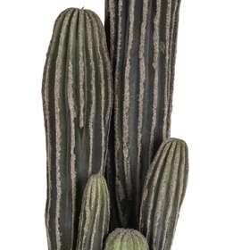 Cactus h 58 cm dettaglio