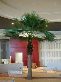 Camerus_Palm_600_cm_Green_4079GRN