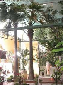 Camerus_Plant_350-600_cm_Green_4078GRN-4079GRN