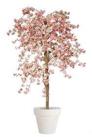 Ciliegio selvatico 180 cm Rosa chiaro