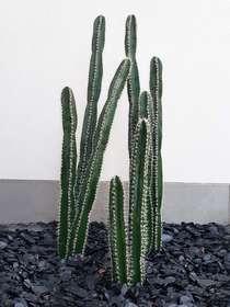 cactus plants composition N.2  h 150 and h 80 cm