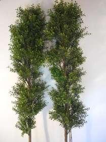 Verde bosso su tronco naturale siepe in dettaglio