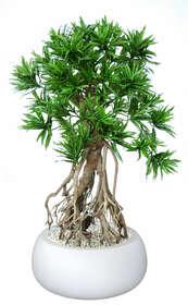 Dracaena Reflexa Everglades 170 cm Green