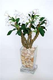 Euphorbia_Milii_50_cm_White_Art_glass_31