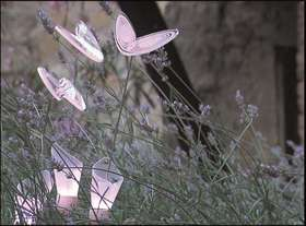 Farfalle di giorno