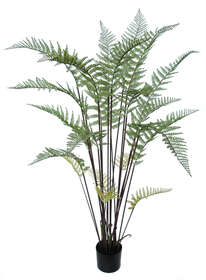 Fern Tree w pot 155 cm Green