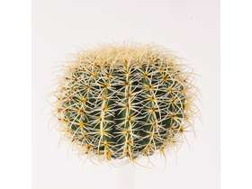 FEROCACTUS BALL without POT diam 48/27,5 cm