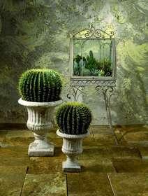 Ferocactus grusonii