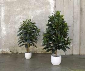 FICUS_CYATHISTIPULA pianta artificiale