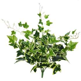 Ivy Bush 48 cm Variegated