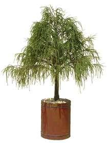 Juniper_Irish_Tree_220_cm_Green_1469A01_bis