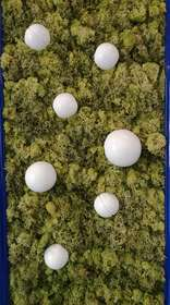 lichene con sfere dettaglio