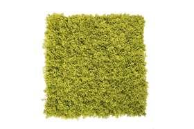 form 50x50 lichen