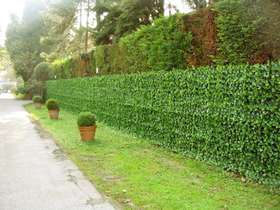 Siepe Rampicante_installazione barriera esterna