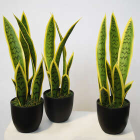 Sanseveria Trifasciata w pot 40 cm Grn Yel 5607GYE