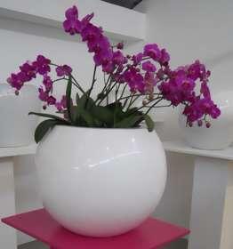 Sfera_con_orchidee
