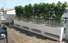 Bosso a barriera terrazzo Parma h 150 cm_PASSIONECREATIVA