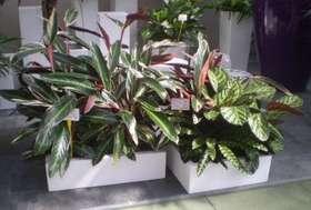 SQUADRO_con_piante_in_terra